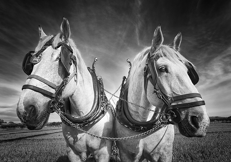 Mono Pictorial 2nd Place: Ploughing Horses by Howard Mason