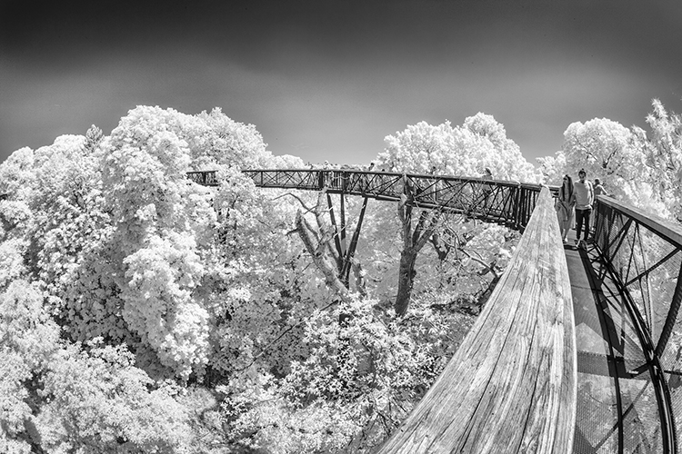 Mono Pictorial 3rd Place: Tree Walk (Kew Gardens) by Howard Mason
